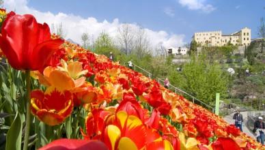 © Die Gärten von Schloss Trauttmansdorff