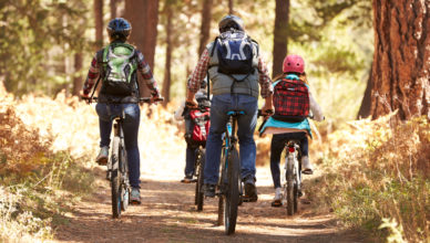 Family mountain biking on forest trail, back view